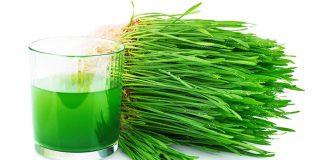 hierba trigo