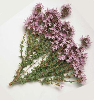 Tomillo planta medicinal imagen