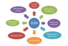 Beneficios del glutation