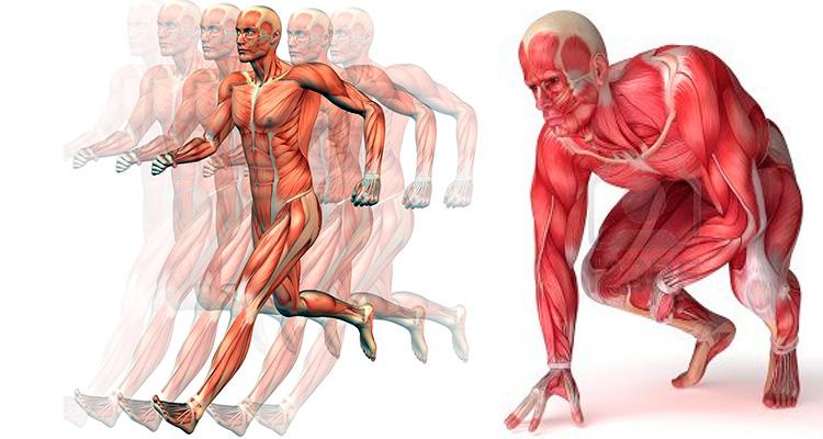 Ácido láctico como afecta al rendimiento atlético