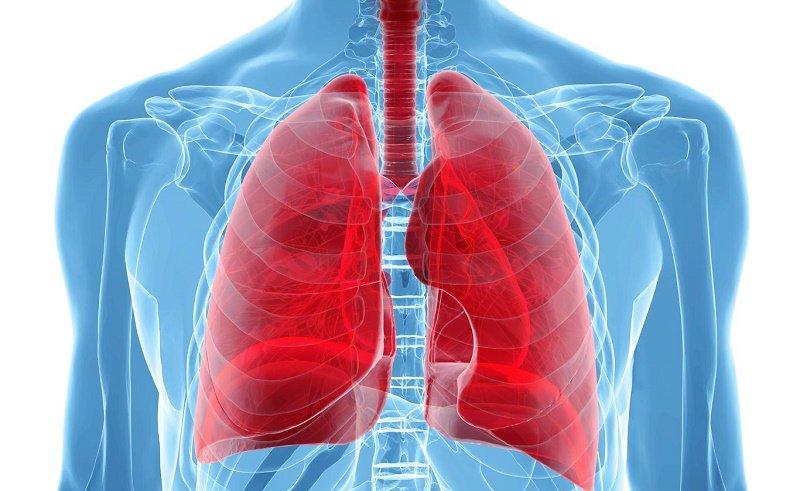 Salud pulmonar alimentos beneficiosos