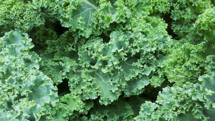 Kale fuente de fibra