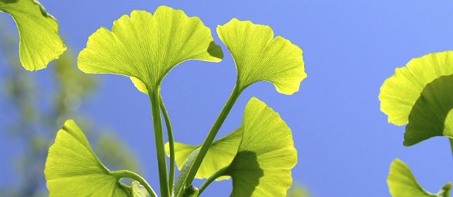 Especias y plantas beneficiosas para el cerebro