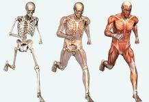 huesos-mas-fuertes