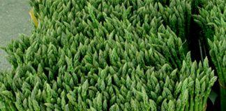 Esparragos verdes propiedades