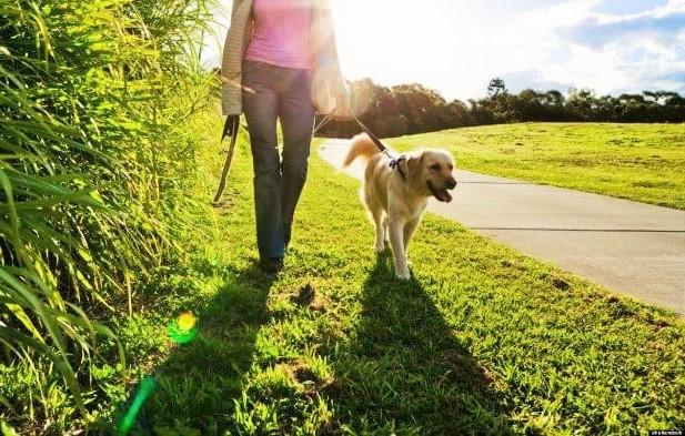 Caminar con tu perro