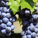 acidos-fenolicos-antioxidantes