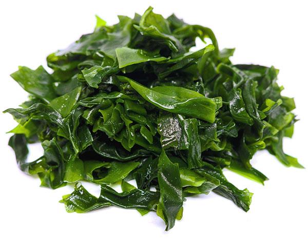 alga-kelp-superalimento