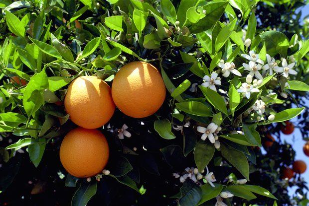naranjas-calorias-y-beneficios-para-la-salud